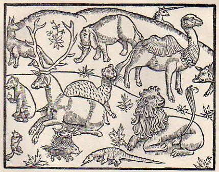 animaux122.jpg